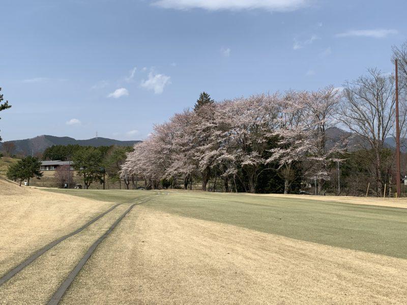 足利カントリークラブ飛駒コースの桜